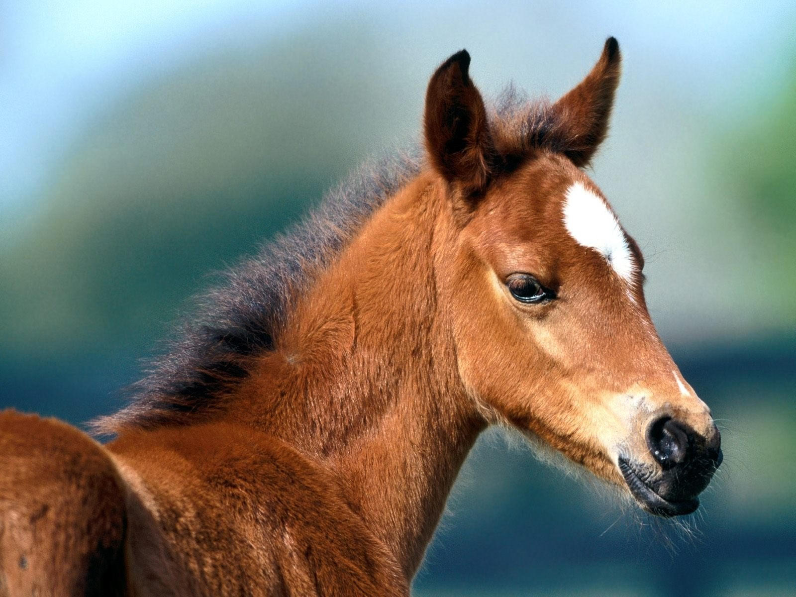 Морда коричневой лошади