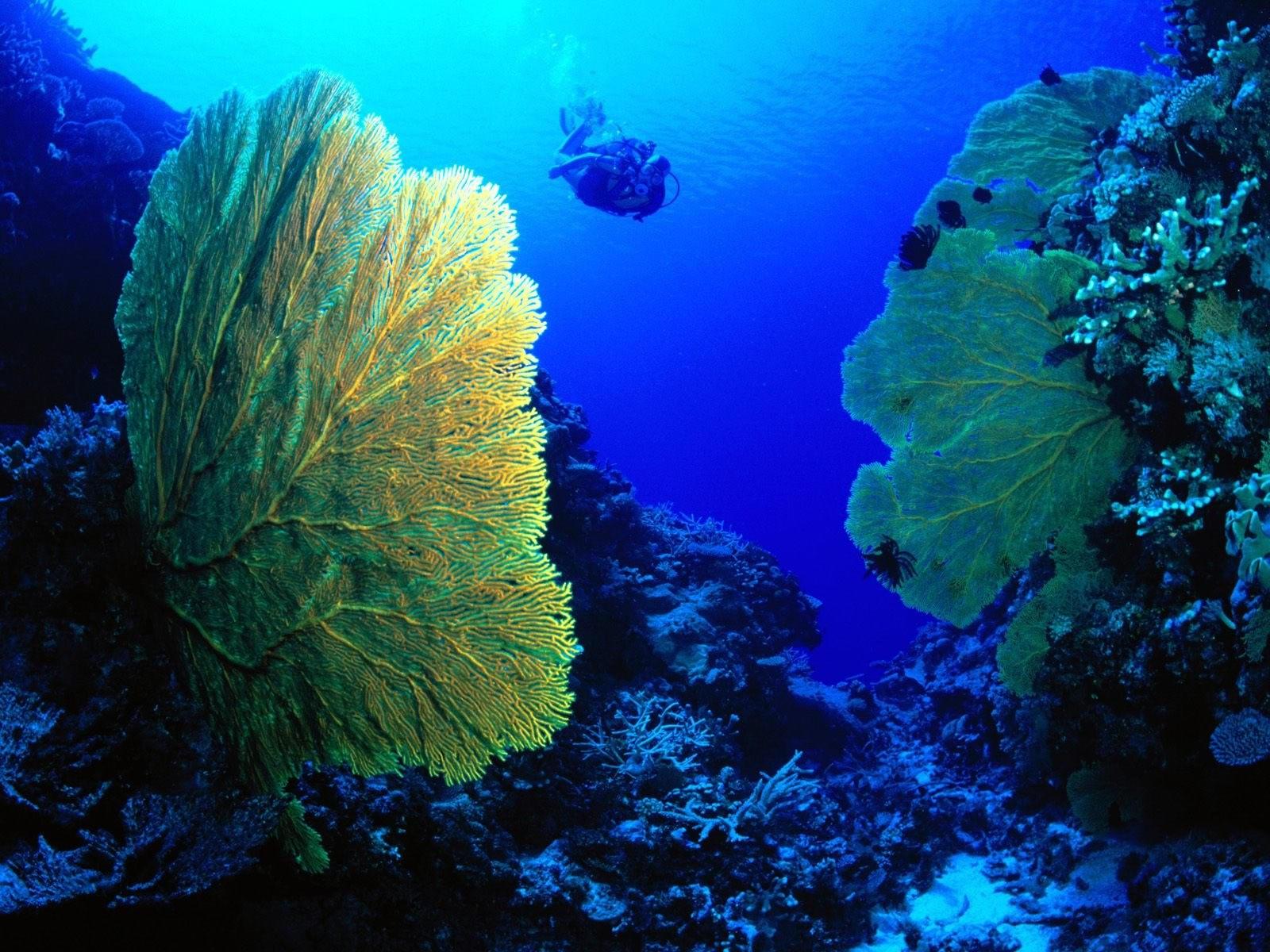 Дайвинг на дне океана
