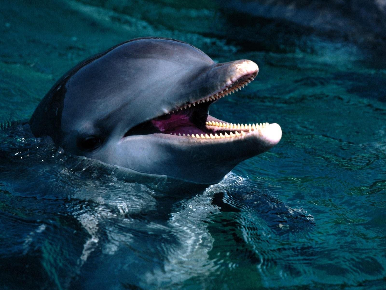 Дельфин с открытым ртом
