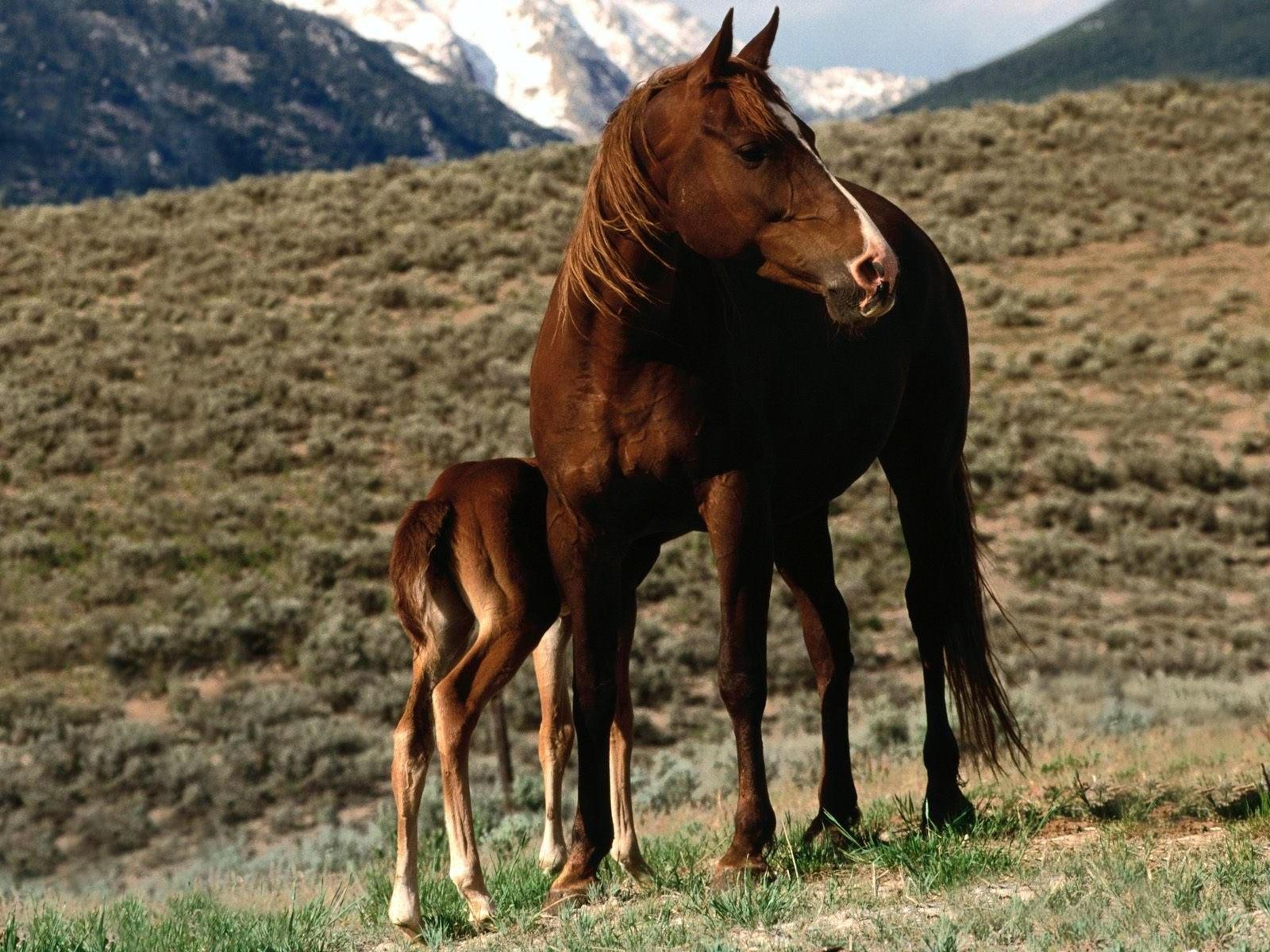 Лошадь с малышом в степи