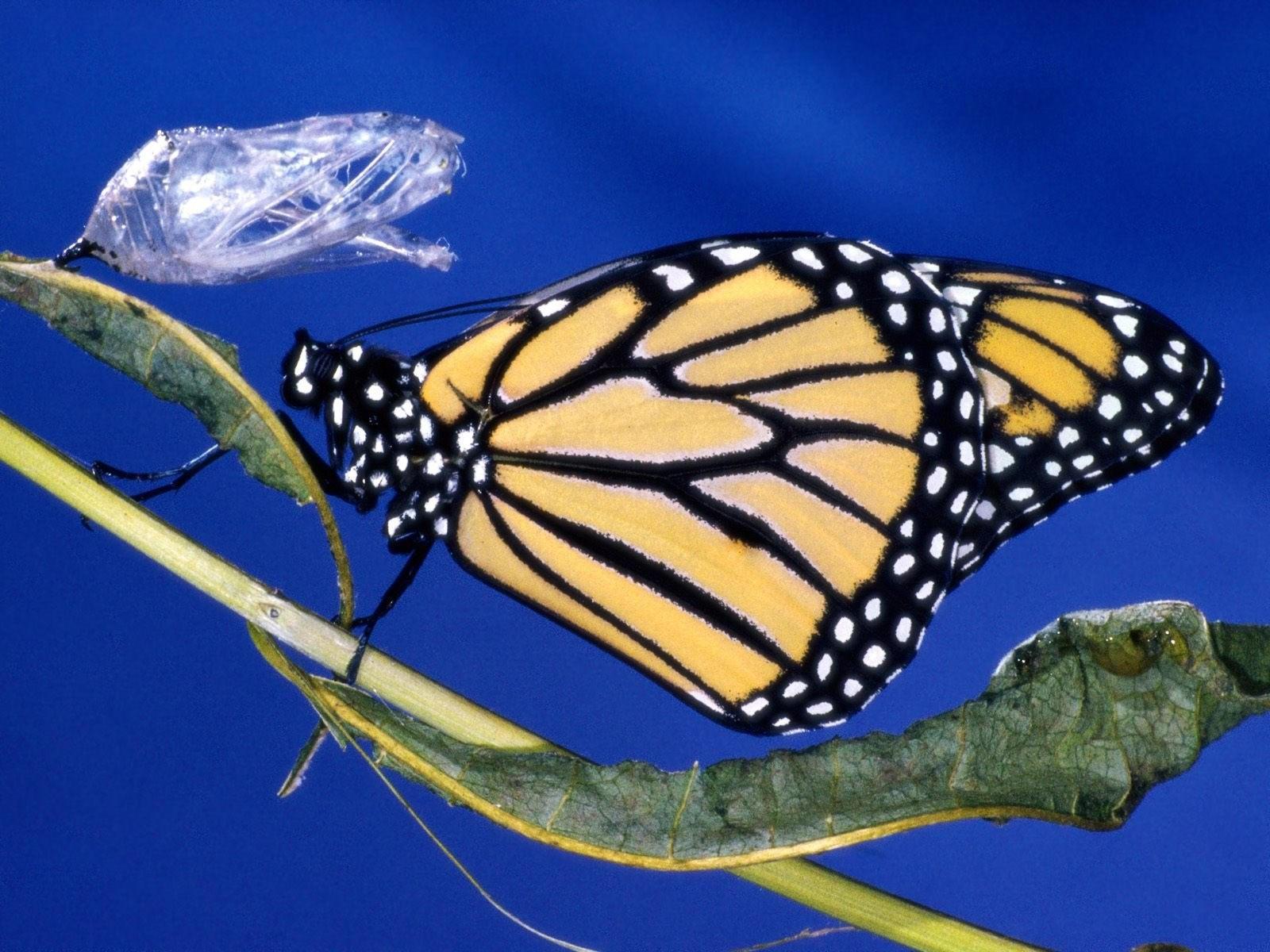 Желто-черная бабочка на стебле