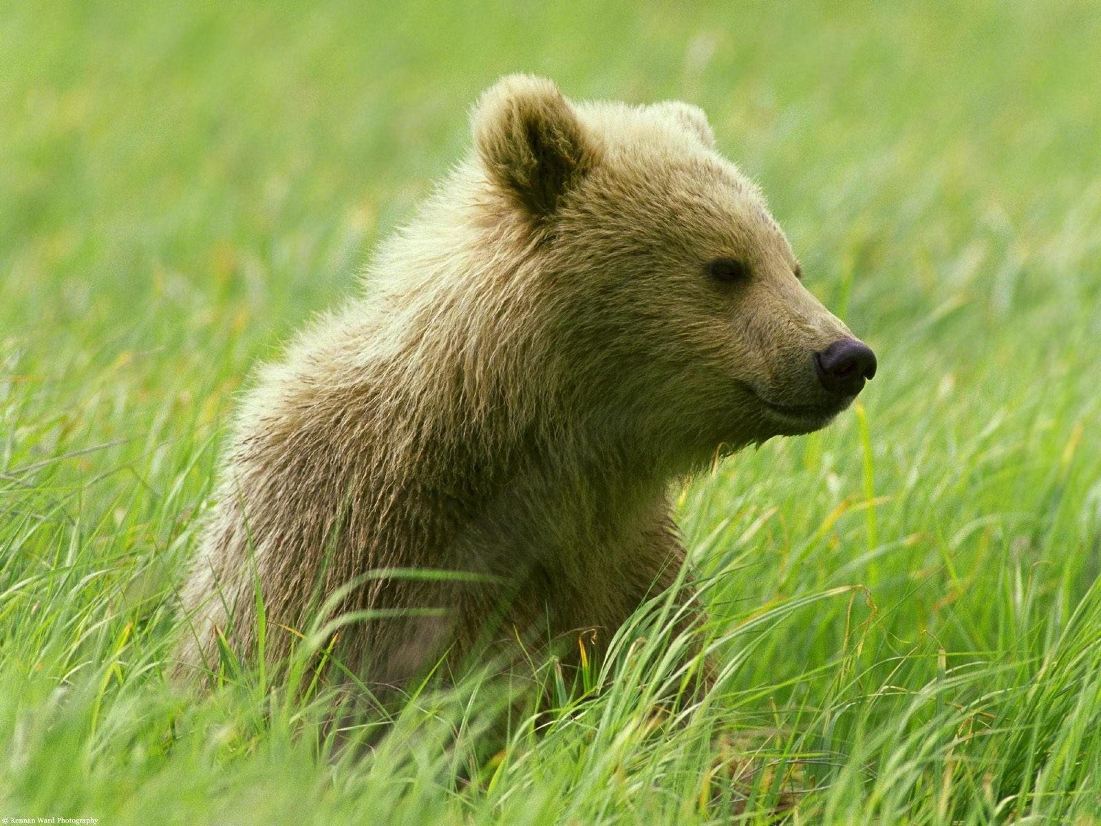 Медвежонок в траве