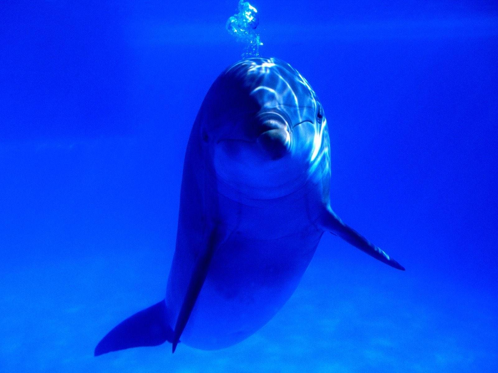 Дельфин в море. Обои с животными, картинки, фото 1600x1200