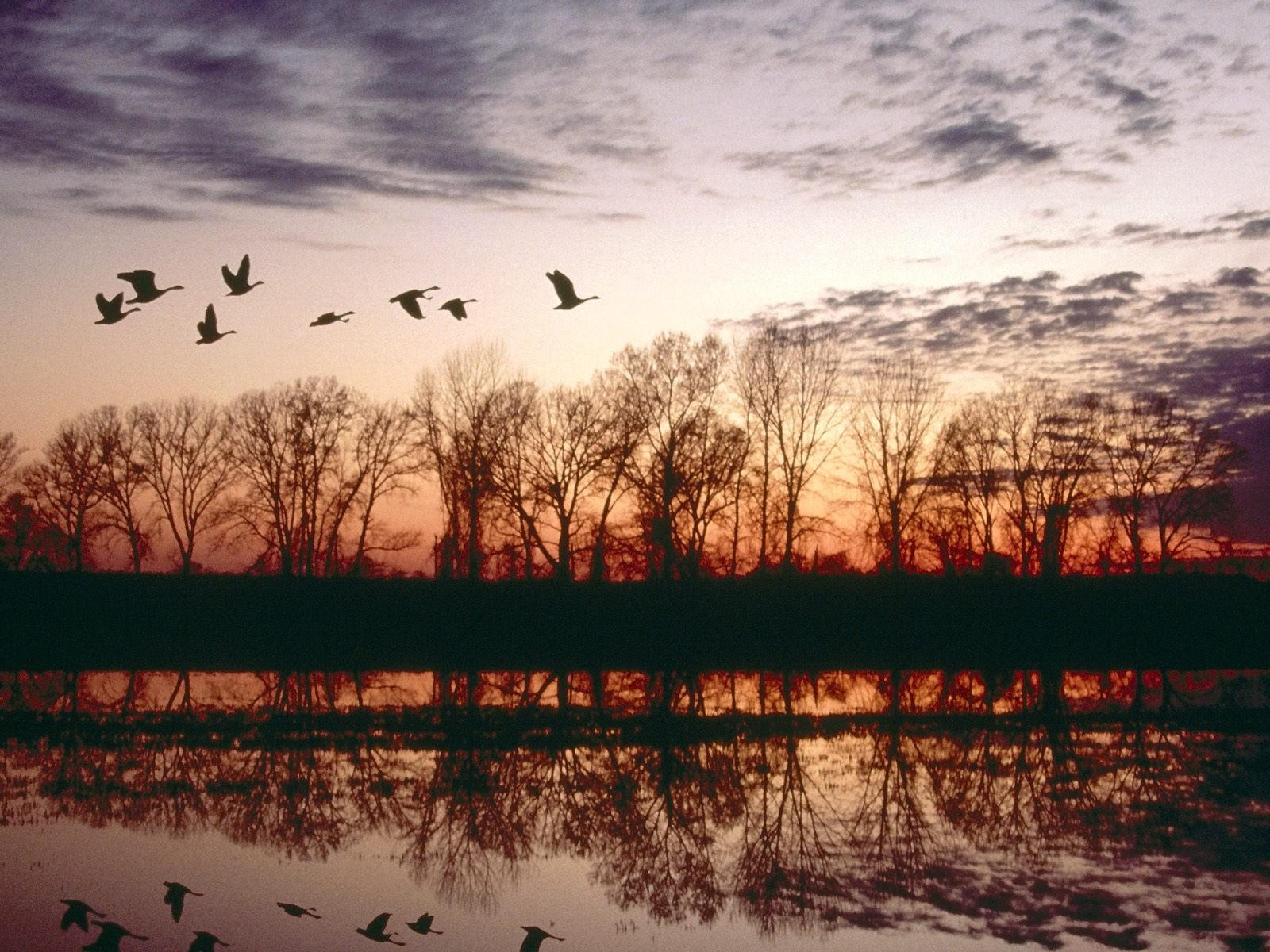 картинки птиц улетающих