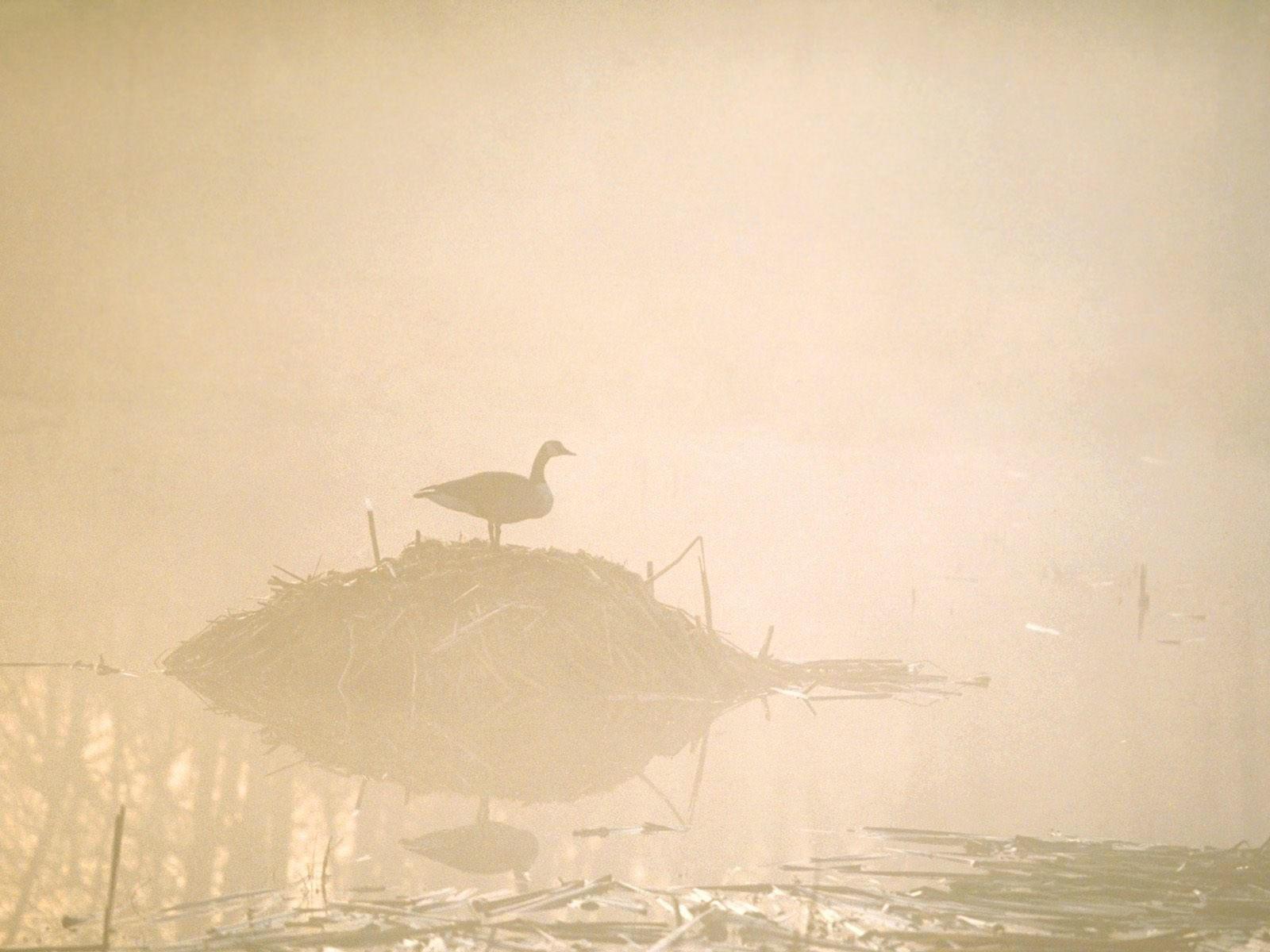 Утка на островке в воде