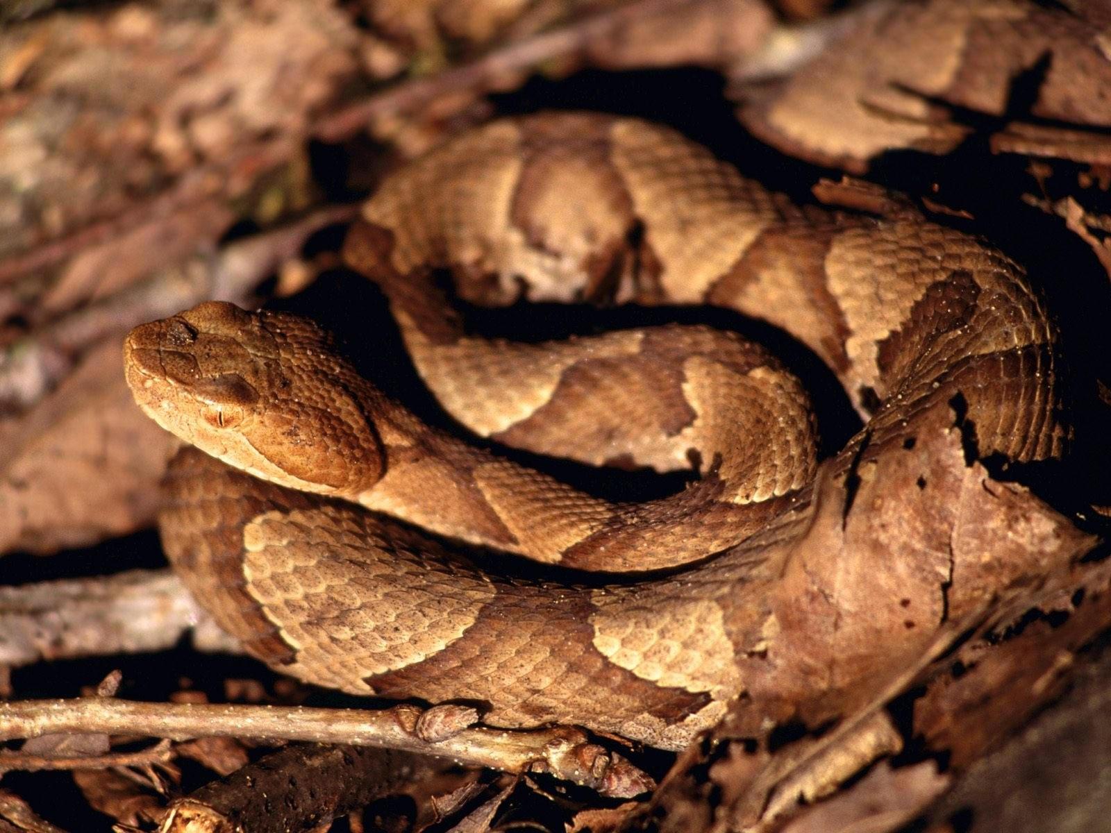 Змея в ветках