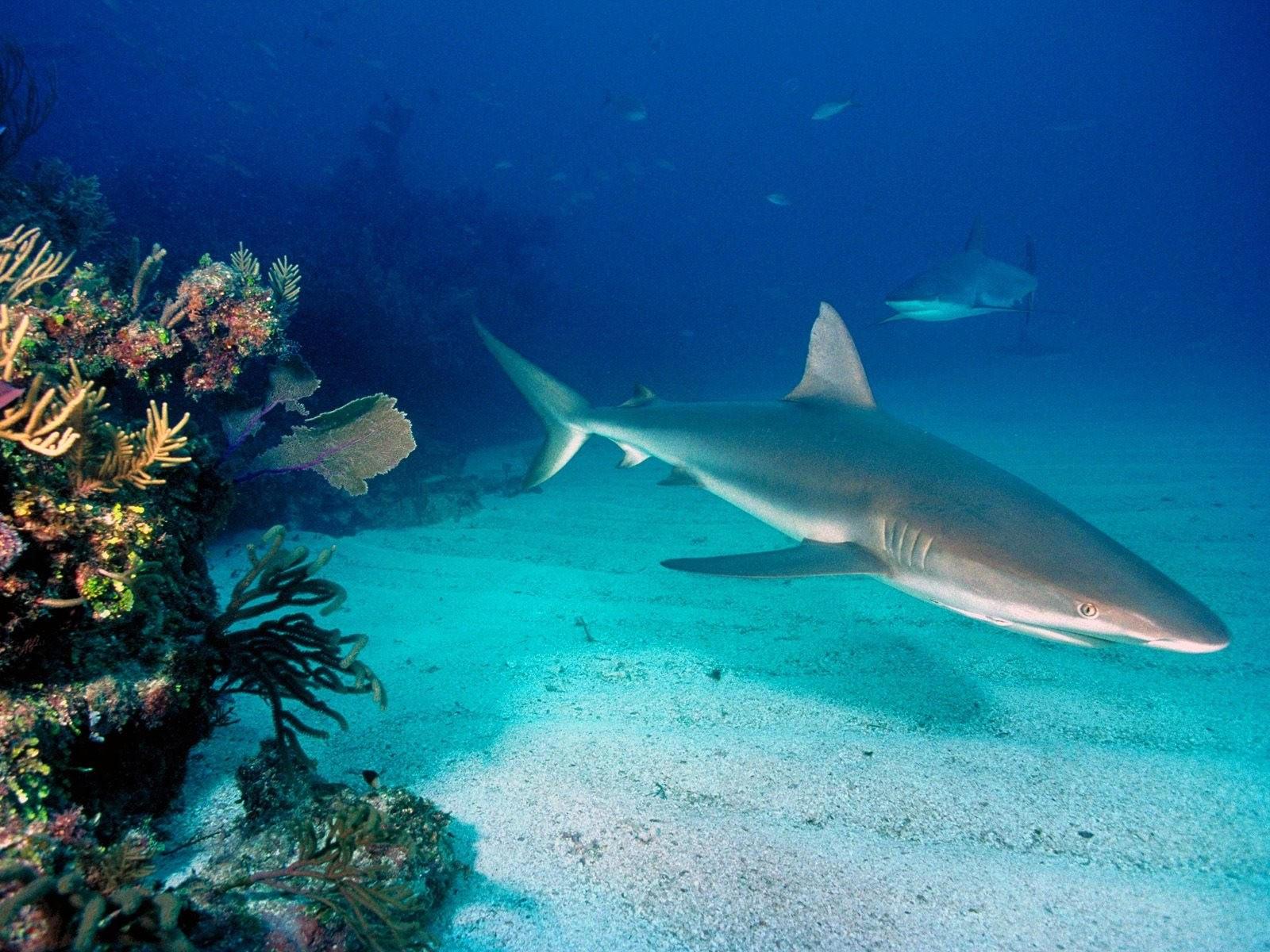 Акула на дне океана
