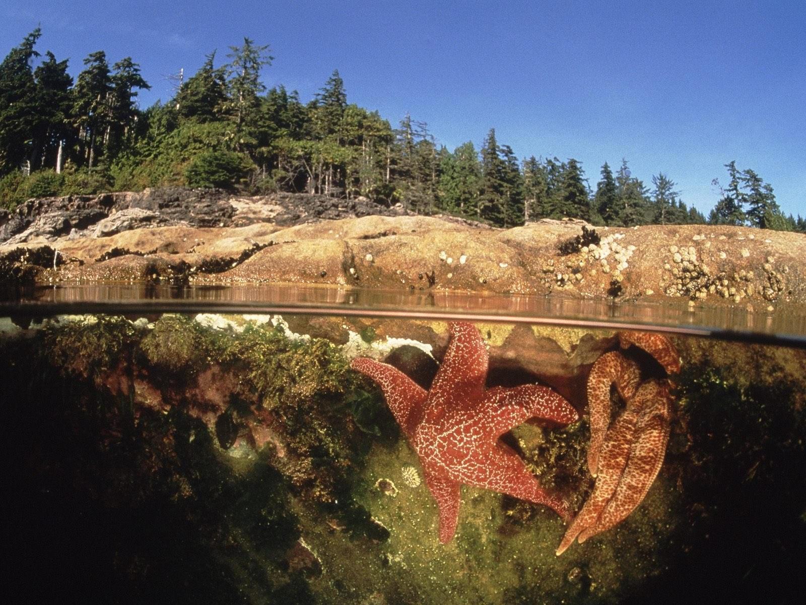 Морские звезды в воде и лес
