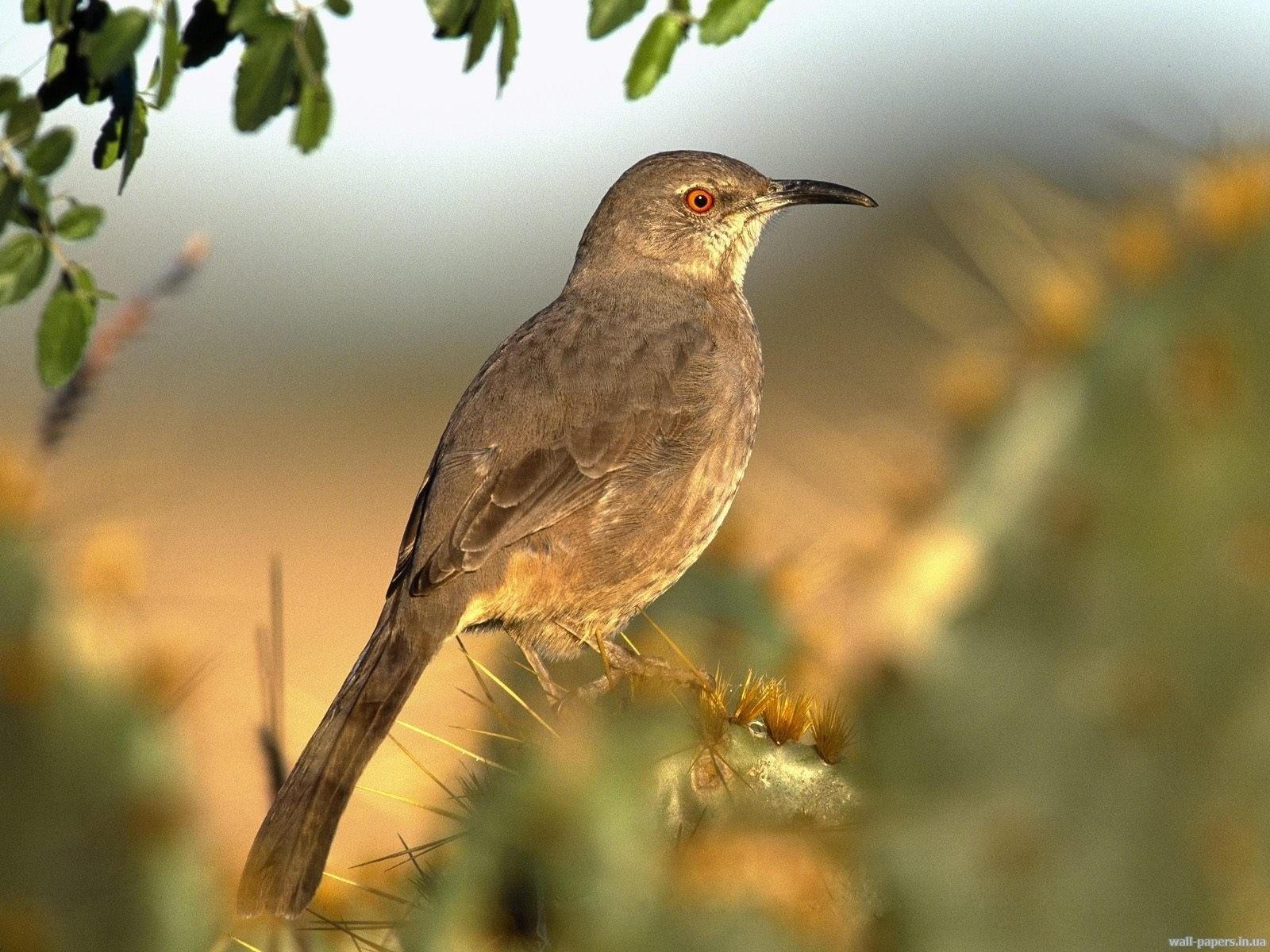 Серая птица на кактусе