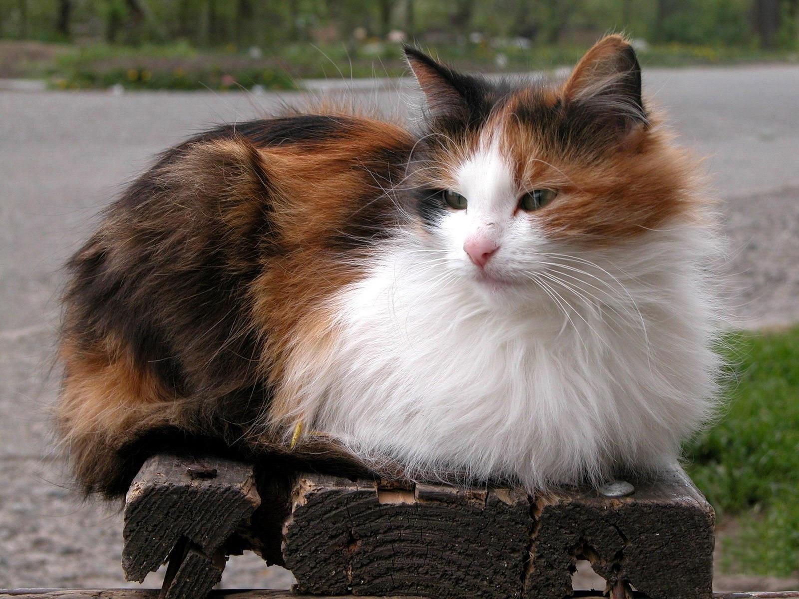 Кошка лежит на скамейке
