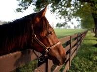 Лошадь за забором