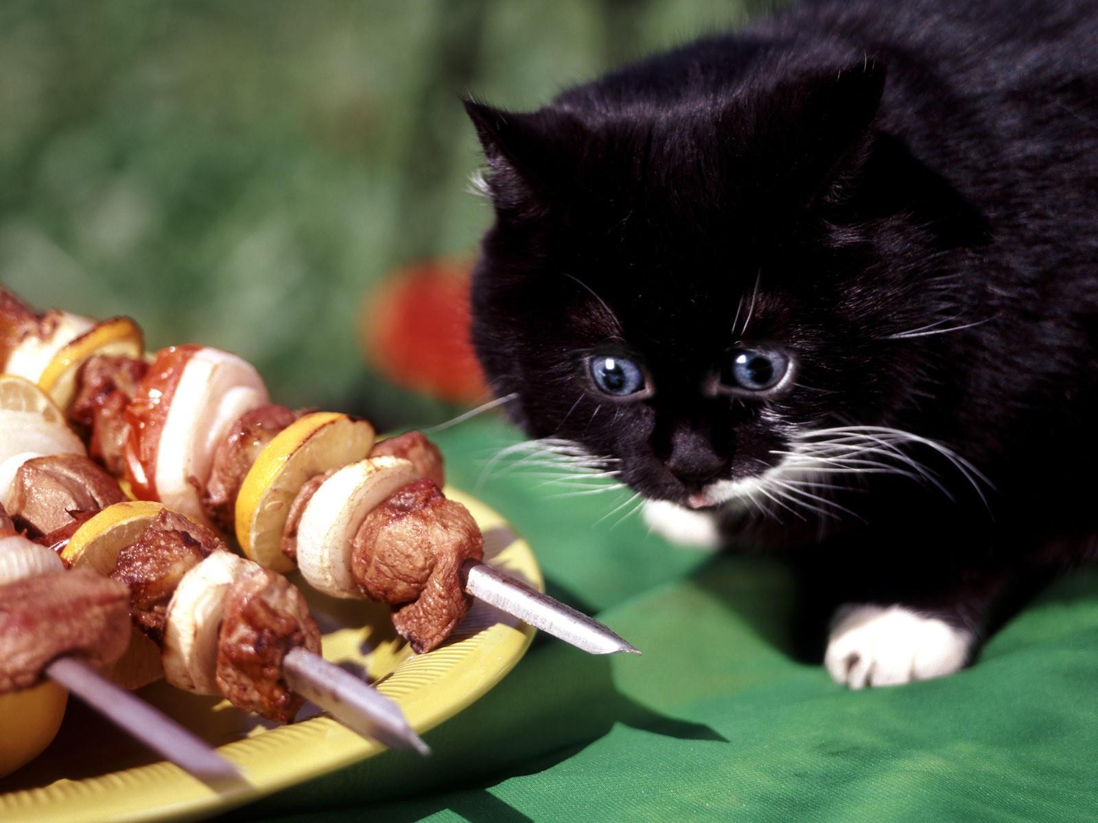 Котенок охотится за шашлыком