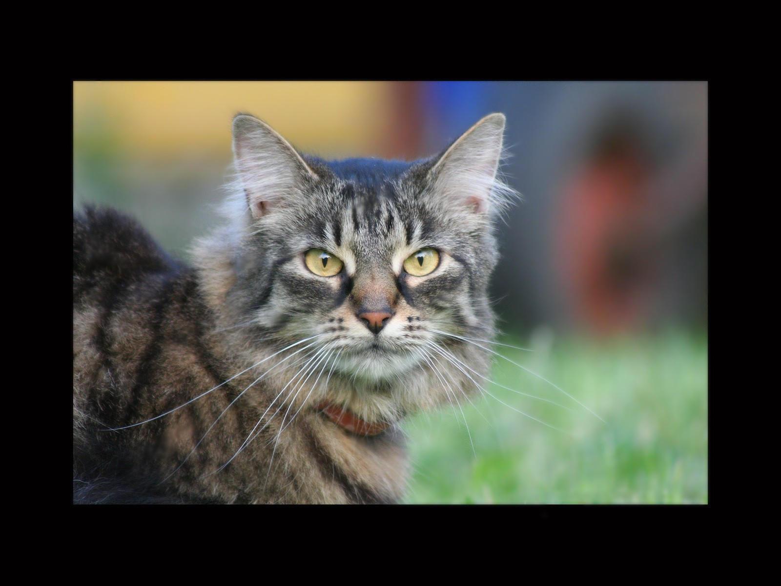Заинтересованный кот
