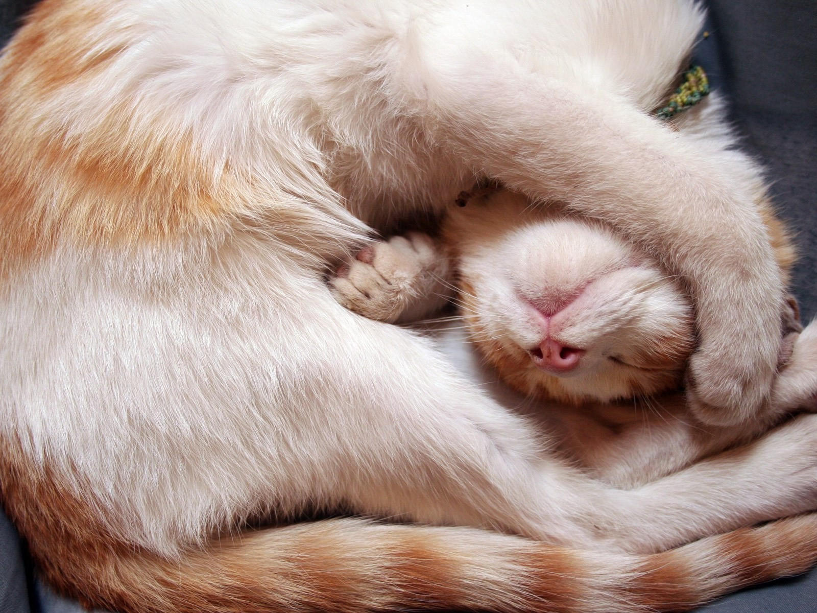 Сладкий сон кота