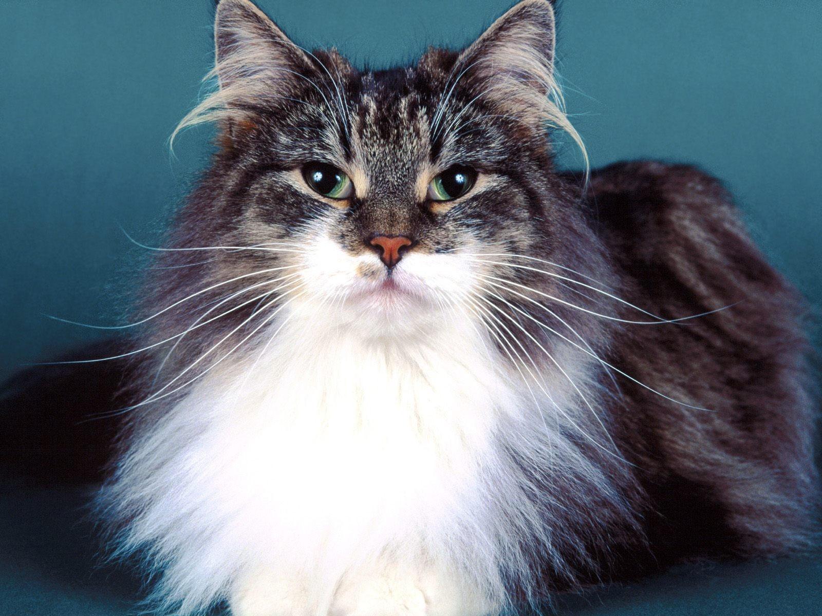 Кот - просто царь