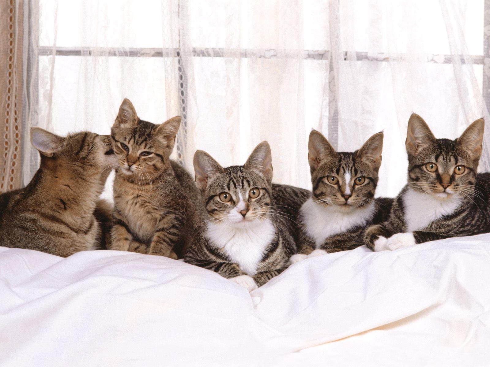 Пятеро котят на диване