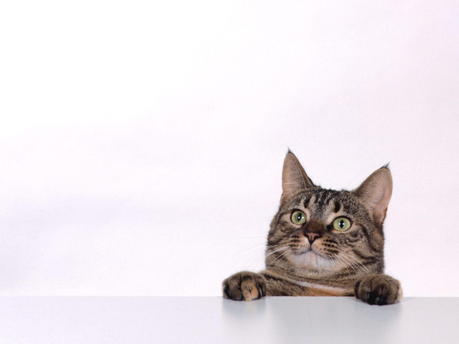 Любопытный кот попрошайка