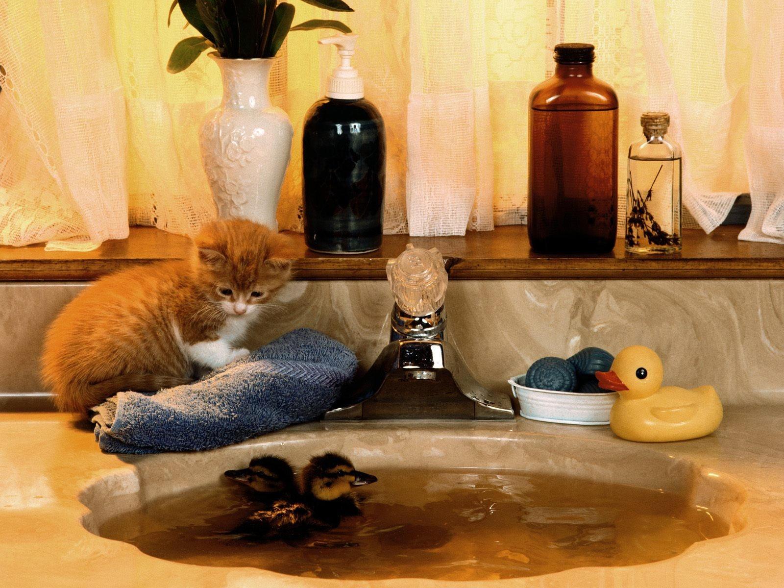 Котенок и утка в ванной