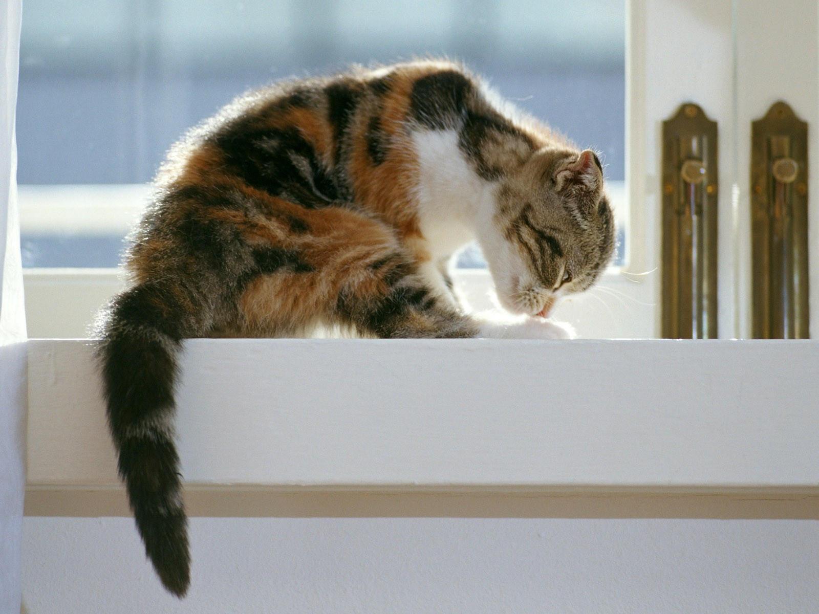 Кот сидит на подоконнике и наводит красоту