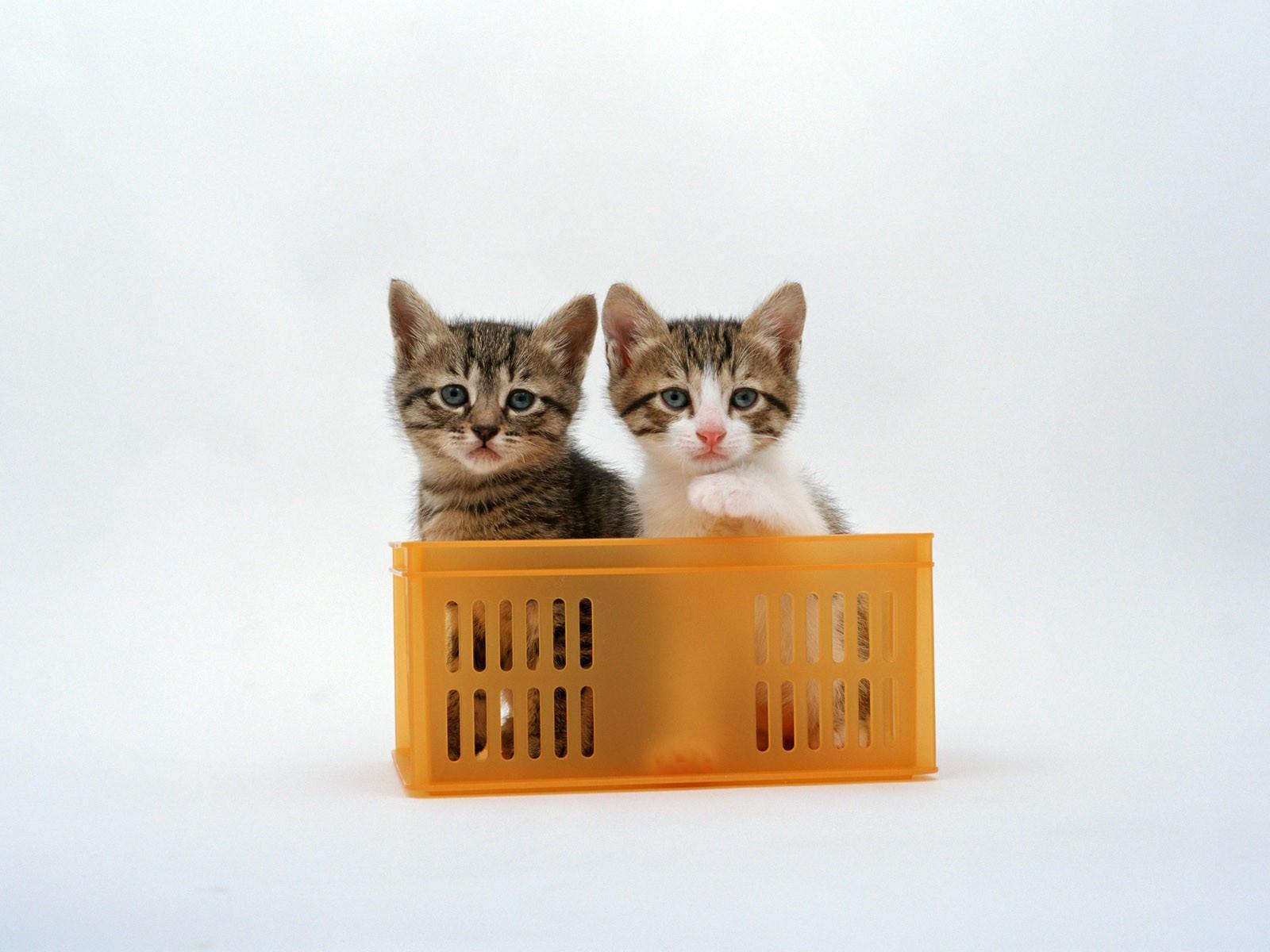 кошка в ящике картинки узнать