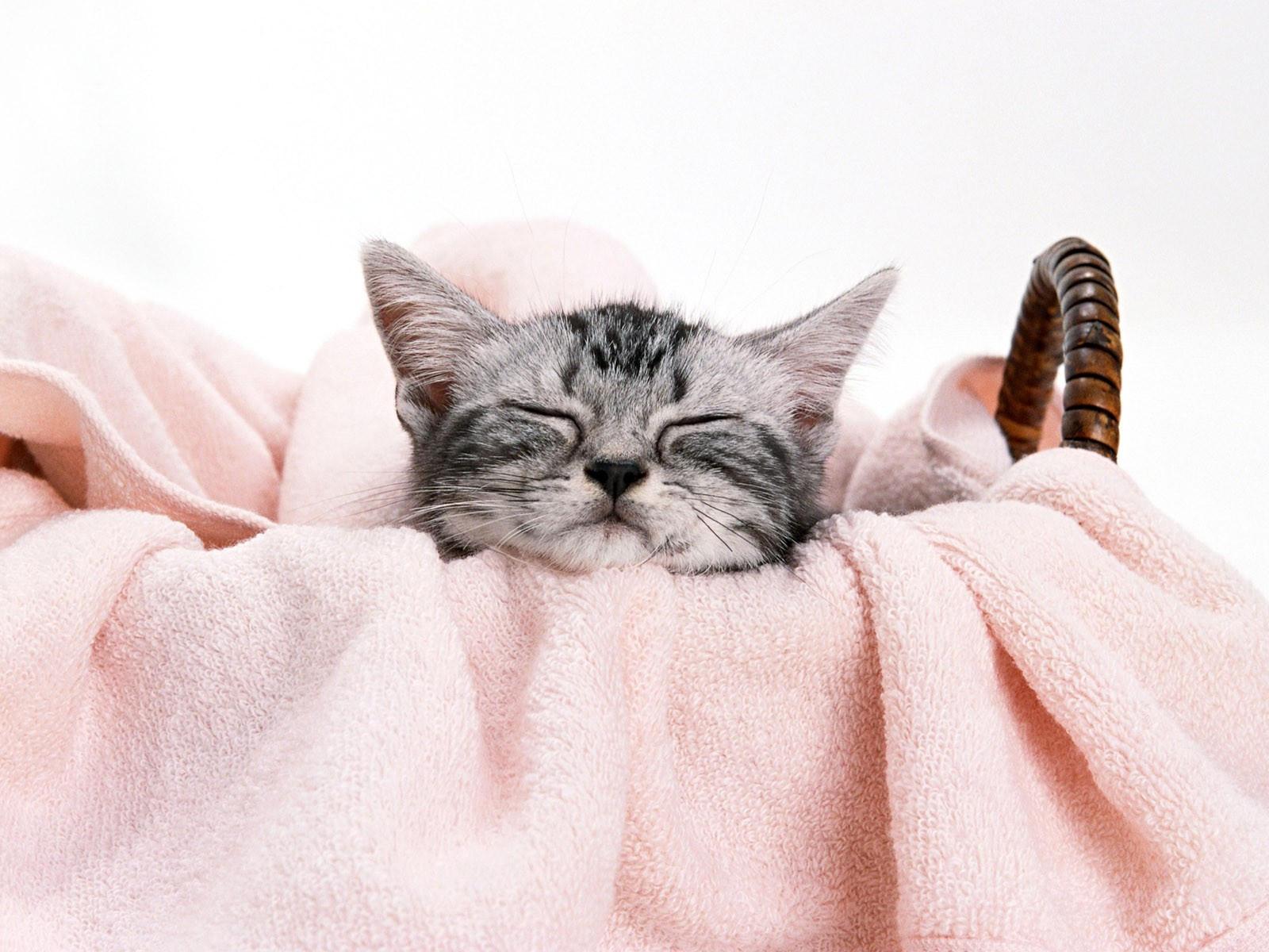 Серый котенок спит в корзине