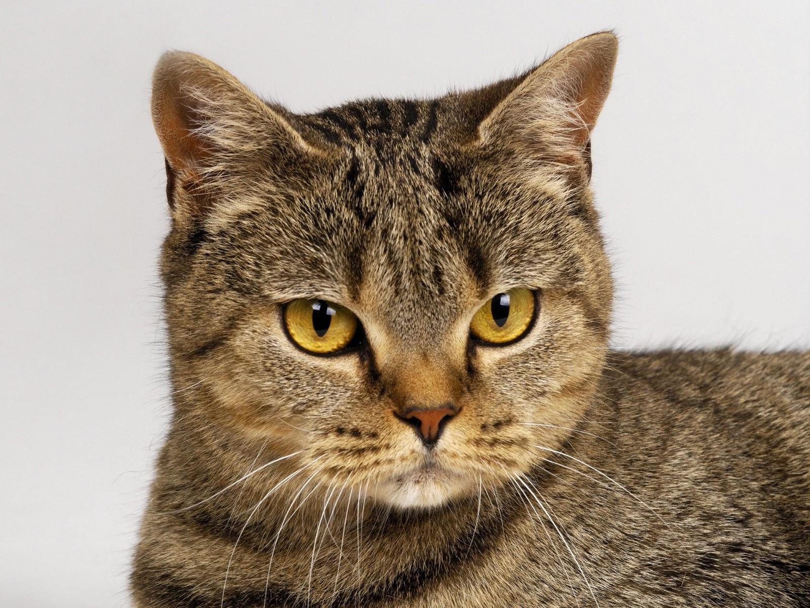 Коты фото красивые коты фото красивые, поздравления