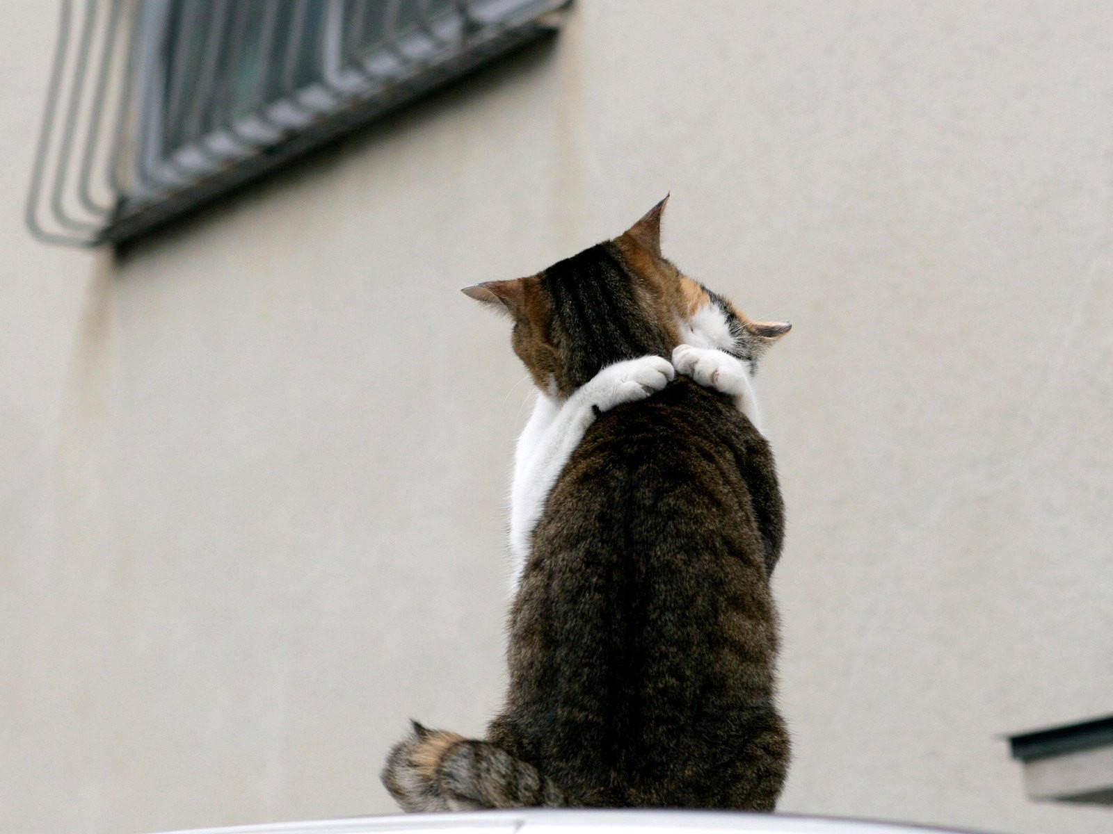 Кошачьи объятья
