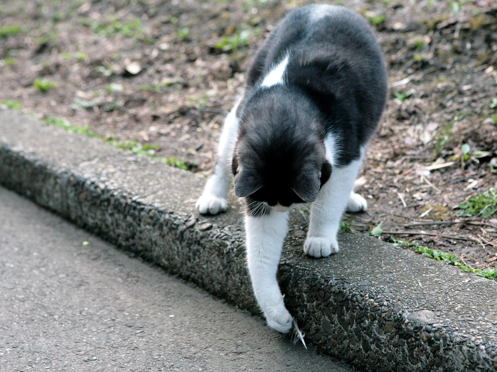 Кот играется с пером