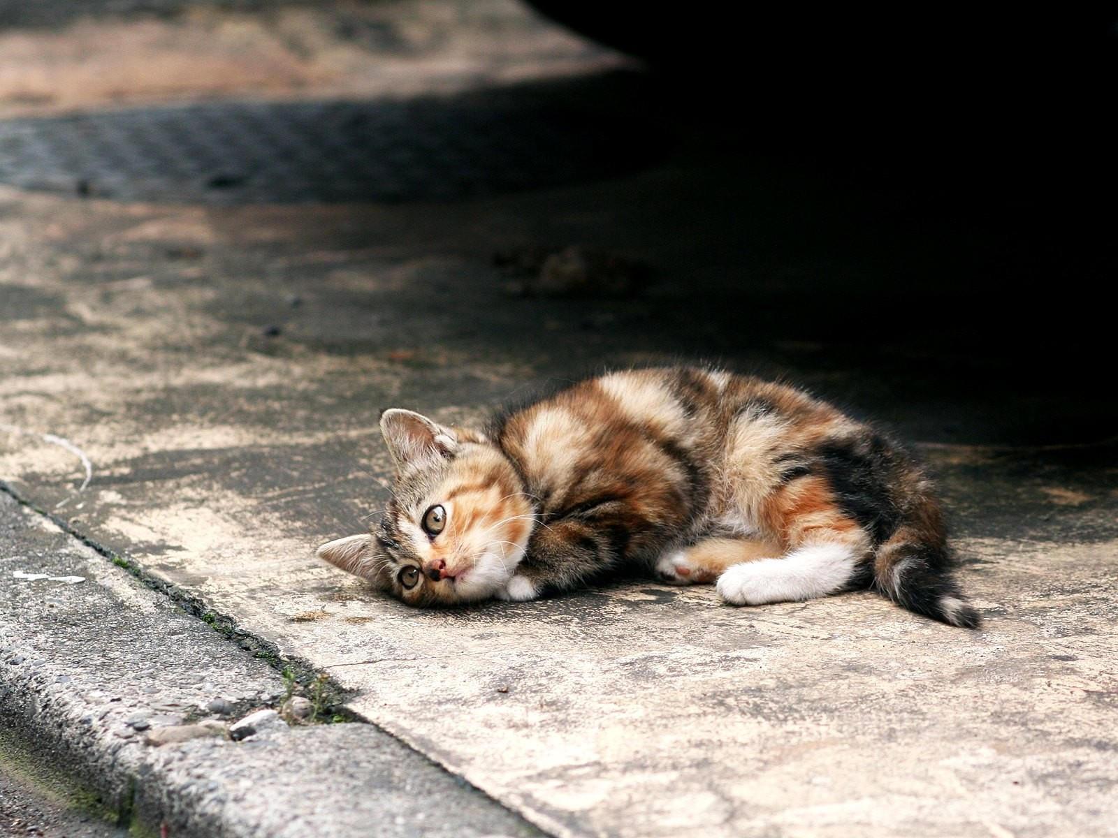 Котенок лежит на асфальте