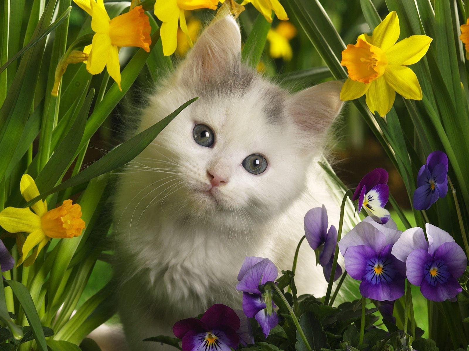 Обои цветы, Кошка. Кошки foto 15
