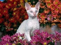 Сфинкс в цветах