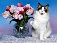 Белая кошка и ваза с тюльпанами