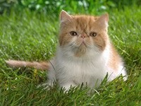 Мордастый рыжий кот