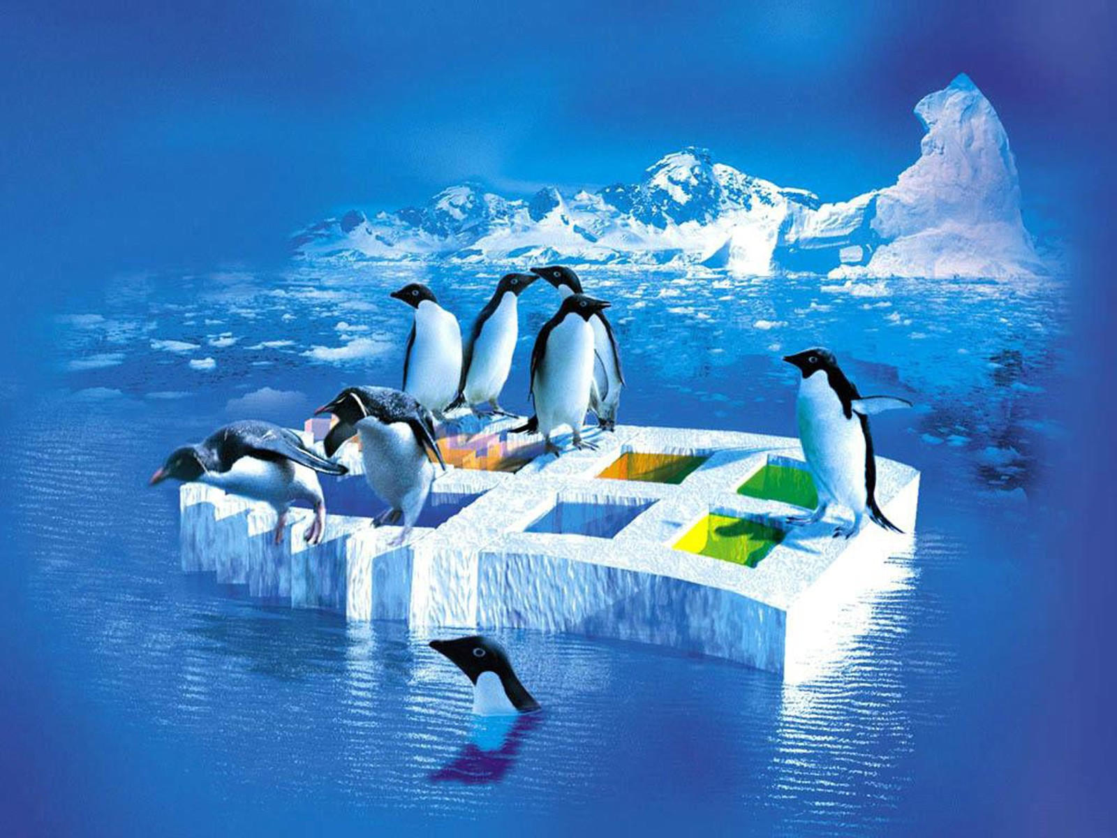 Пингвины на севере