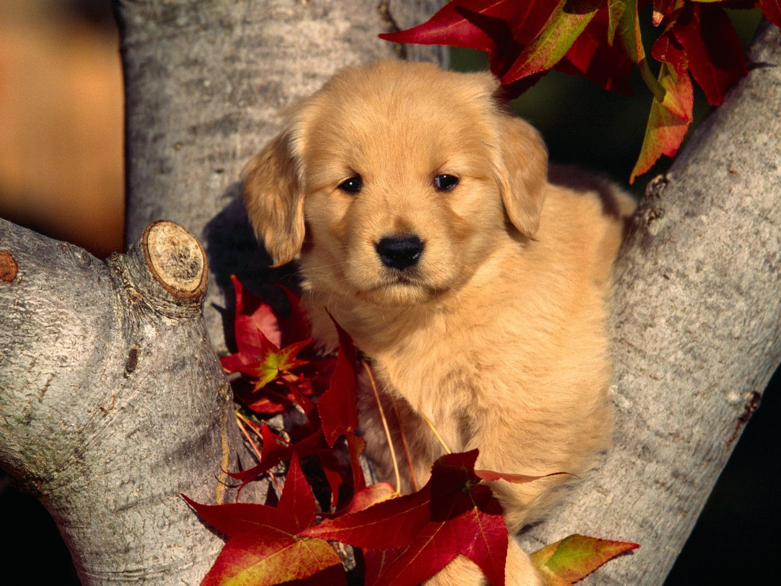 Щенок на дереве осенью
