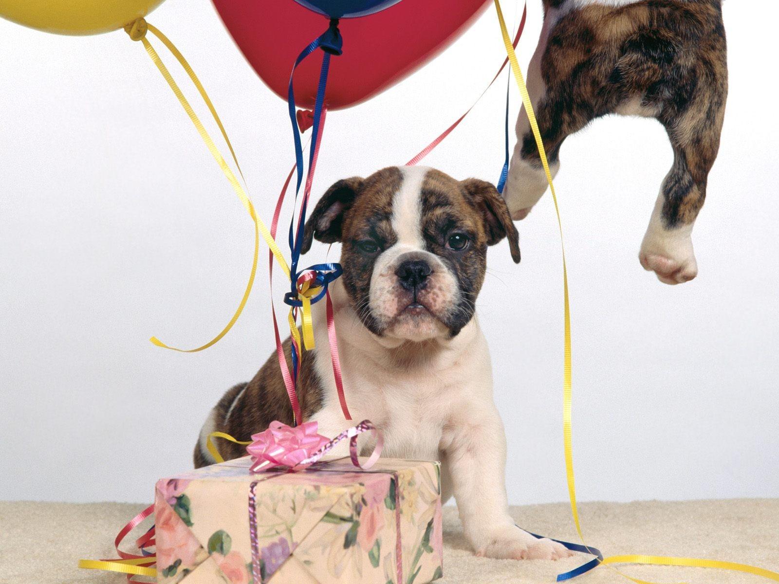 Поздравления с днем рождения друга боксер