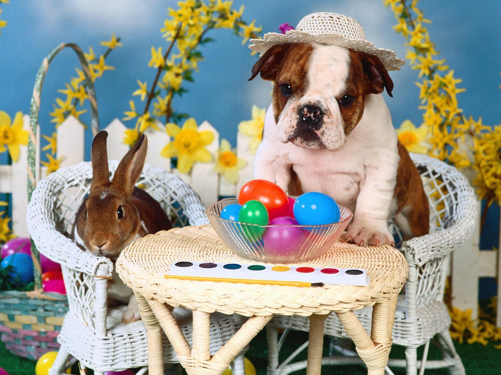 Картинки праздничные с животными, картинка прикольная молодежь