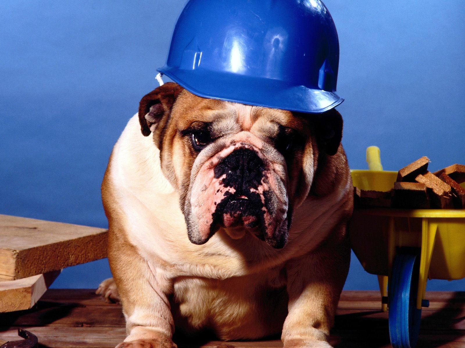 подробнее ветераны животные строители картинки потребуется лишь совершить