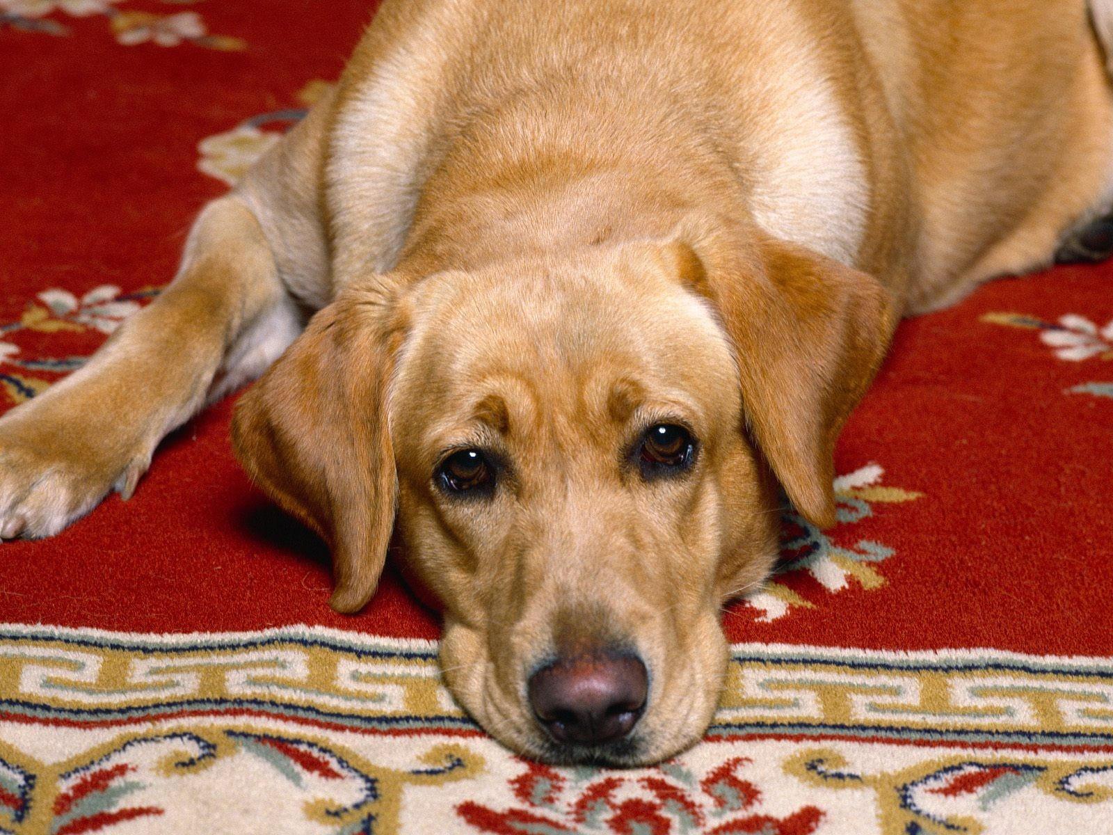 Нажмите на картинку с собаками, чтобы просмотреть ее в реальном размере.