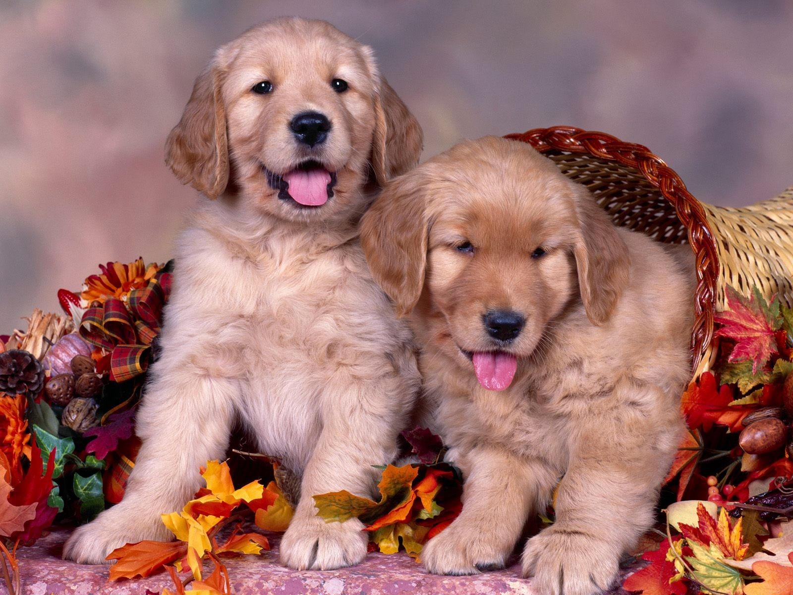 Картинки с собаками картинки с собаками