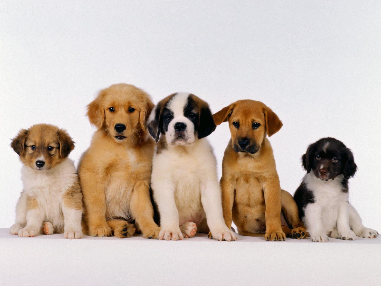 Пять щенков разных пород