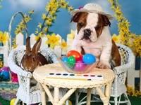 Собака боксер и пасхальный кролик