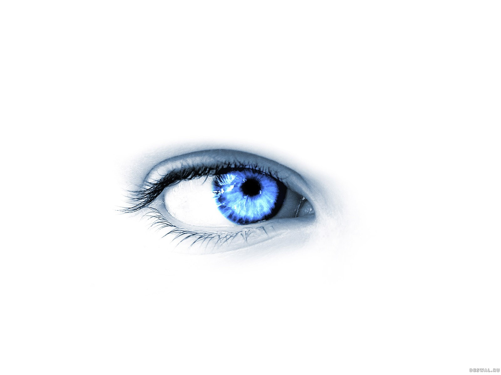 Фото 76.. Нажмите на картинку с обоями глаз, чтобы просмотреть ее в реальном размере