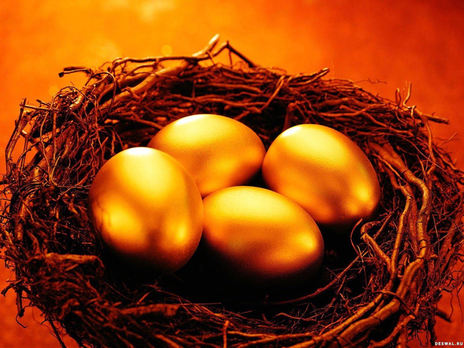 Золотые яйца в гнезде