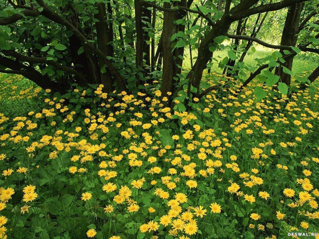 лесные цветы картинки: