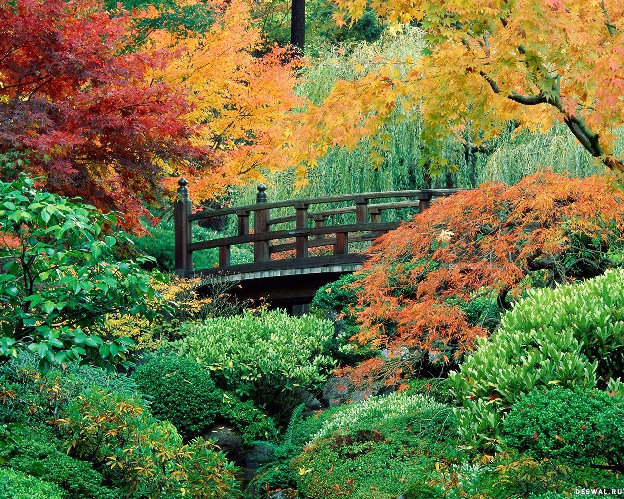 Осенний сад с мостом нажмите на