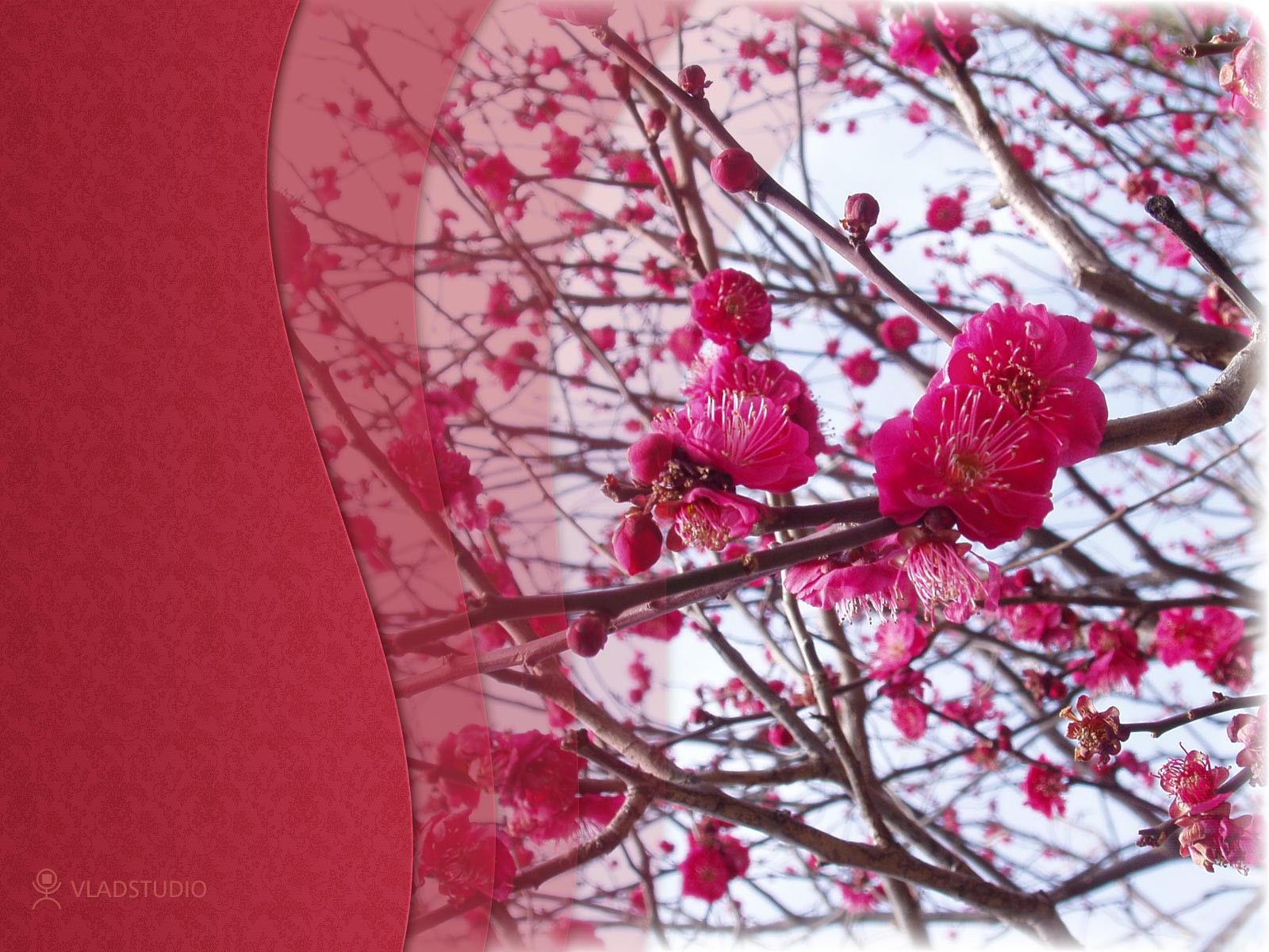 Ветка с цветущими розовыми цветами