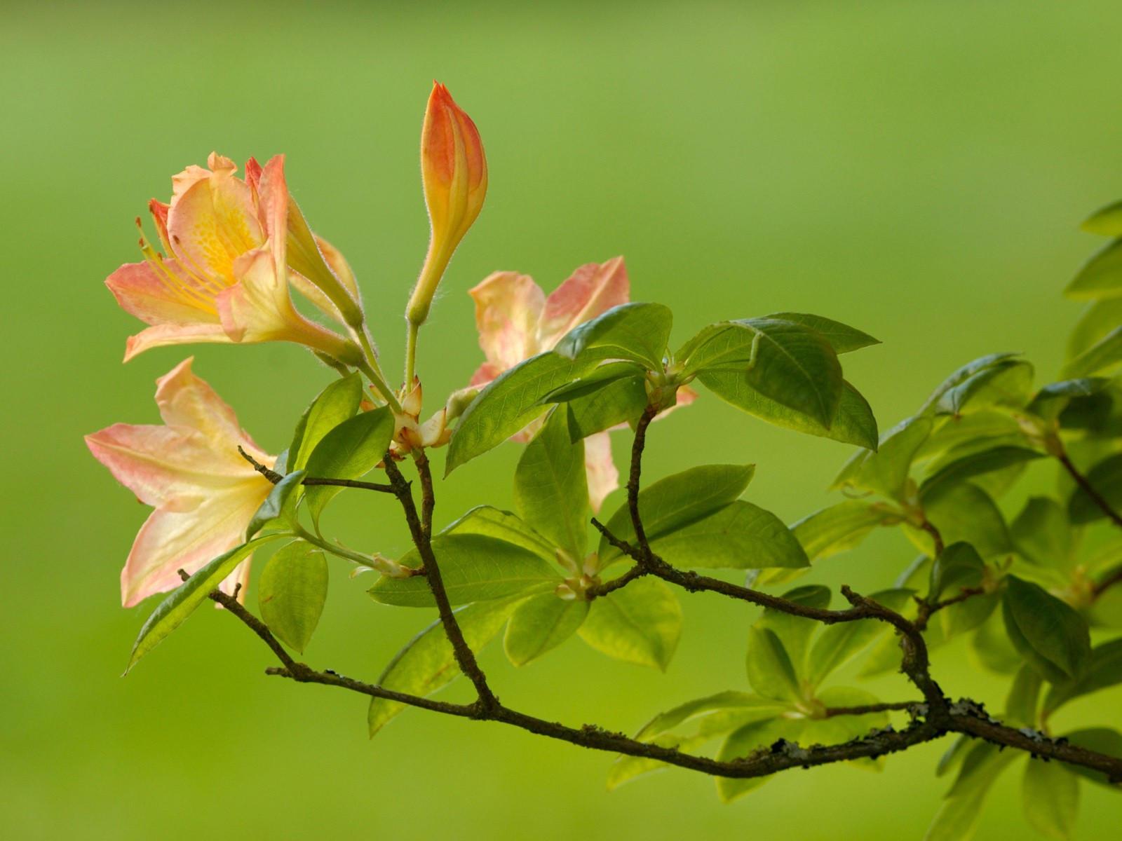 Ветка с бледно-розовыми цветами