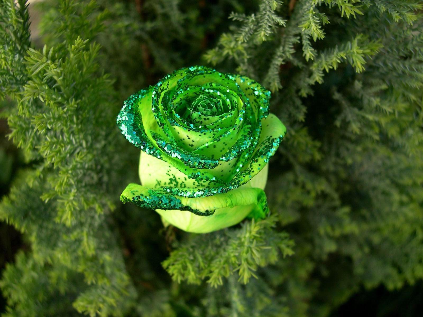Роза зеленого цвета с блесками в папоротнике