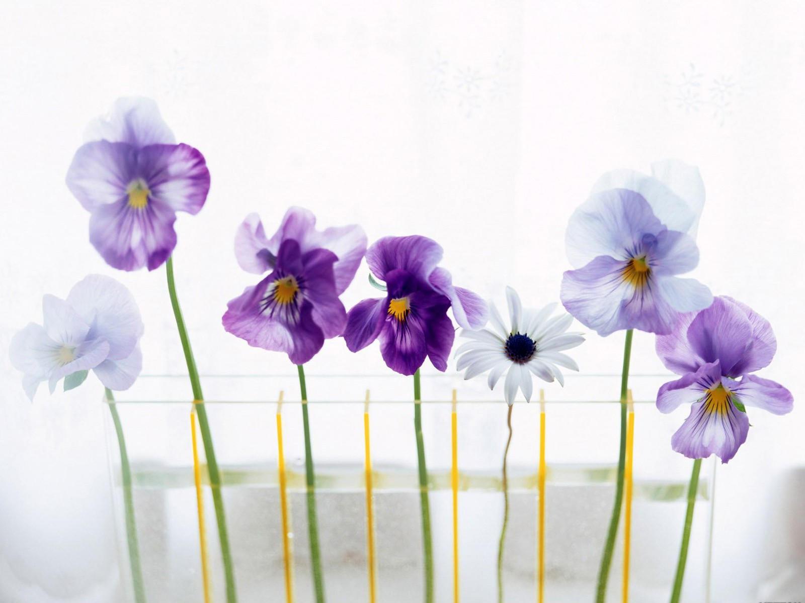 Ваза с семью цветами